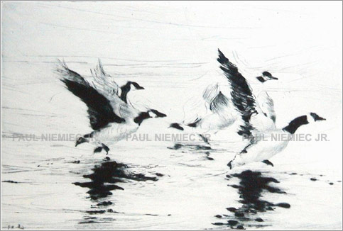 Wingbeat etchings and dry points by Paul Niemiec Jr. Running Wind Studio